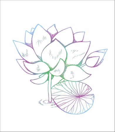 Color illustration of lotus flower in style. Color lotus pattern Vettoriali