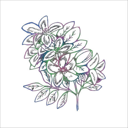 Color illustration of branches of flowers of lilac. Manual graphics.