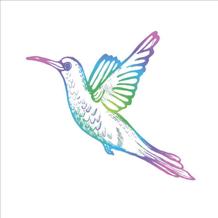 Color illustration of a flying hummingbird. A little sophisticated bird. Illustration
