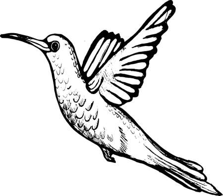 Illustration of a flying hummingbird. A little fast bird.