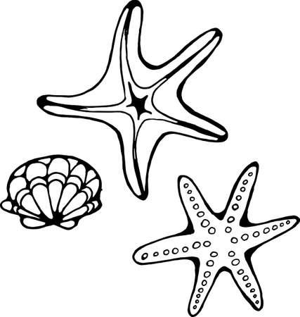 Figure starfish and oysters. Sea summer combination. Illustration