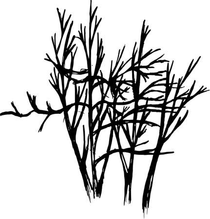 Black white picture of tree branches. The play of light and shadow.