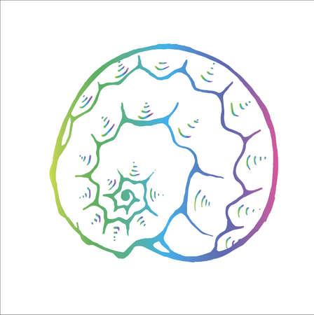 Gradient sea animal drawing. Ancient marine spiral. Tattoo idea.