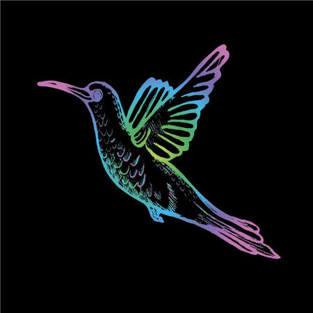 Color gradient illustration of a flying hummingbird. A little sophisticated bird. Banque d'images - 147949854