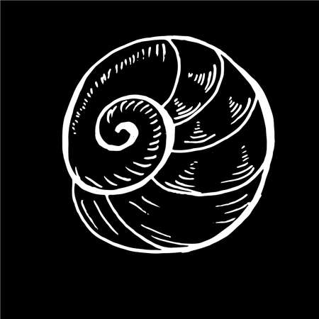 Sea animal drawing. Ancient marine spiral. Tattoo idea. Chalk on a blackboard. Standard-Bild - 147691884