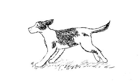 walk away: running Dog hand drawing isolated vector