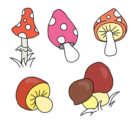 morel: Collection of cartoon different mushrooms. Drawn mushrooms vector illustration, isolated.