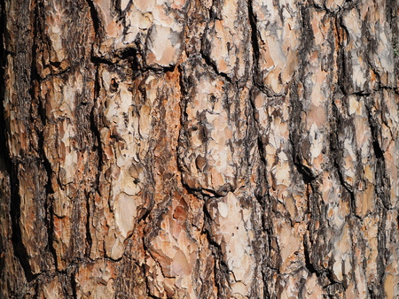 colores calidos: close up of pine tree bark warm colors