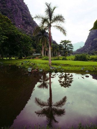 reflection of palm trees on the river