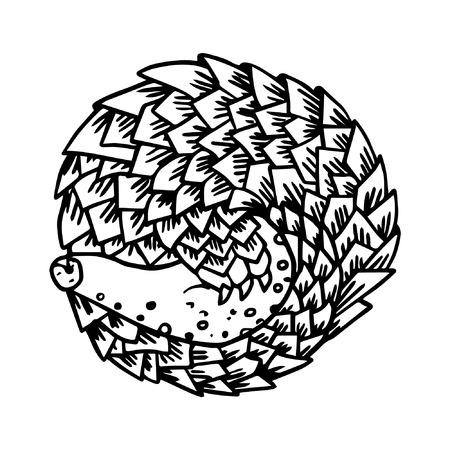 ボールで丸くなって眠っている漫画アルマジロ動物  イラスト・ベクター素材