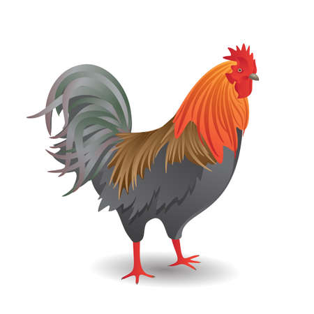 Vector illustration of the good-looking motley cock Vector