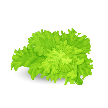 green salad: illustration of fresh green salad on the white background