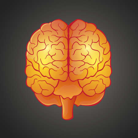 front view: illustration of human organ brain front view in bright colors