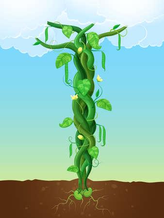 동화 잭과 콩나무 성장의 개념에 콩 줄기의 벡터 일러스트 레이 션