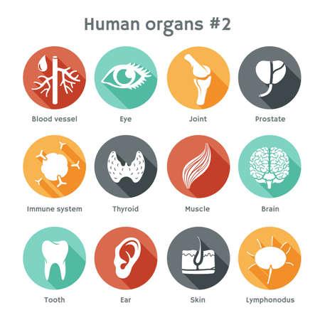 organi interni: Icone rotonde vettore di organi umani Design piatto Vettoriali