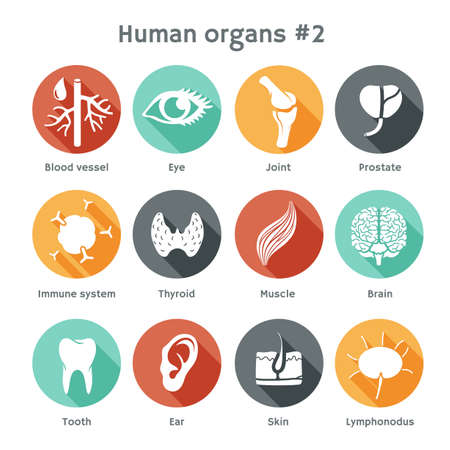bone anatomy: Vector round icons of human organs Flat design