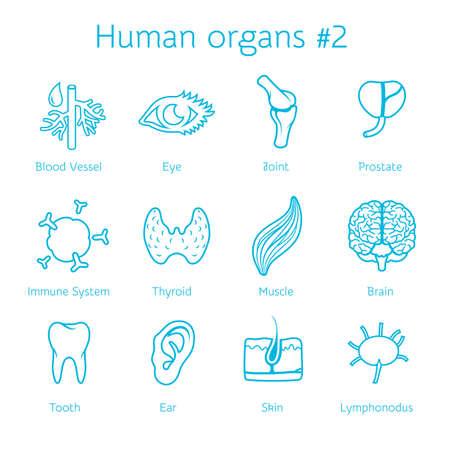 inmunidad: Ilustración vectorial de contorno Iconos de órganos humanos para infografía
