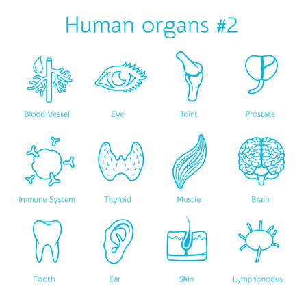 human immune system: Vector illustration of outline icons human organs for infographic Illustration
