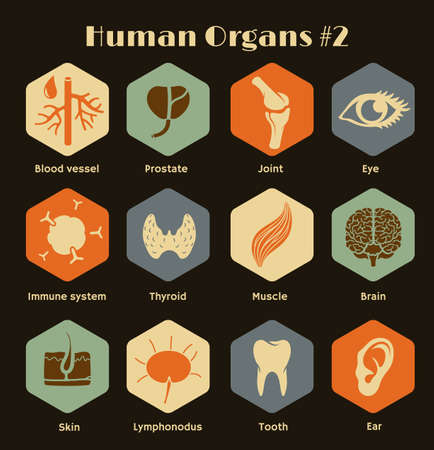 Iconos Vector retro de los órganos humanos y los sistemas de diseño Flat