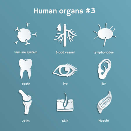 cut outs: Vector paper icons of  organs and systems of human body