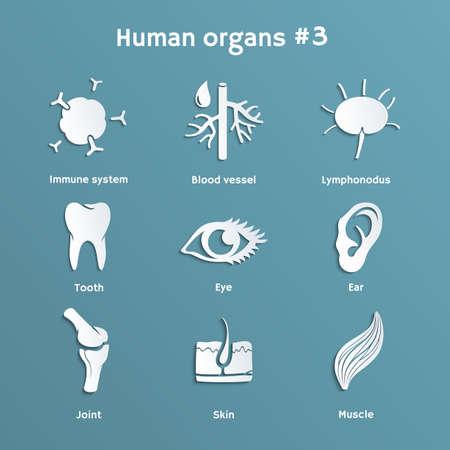 Vector papier iconen van organen en systemen van het menselijk lichaam Stock Illustratie