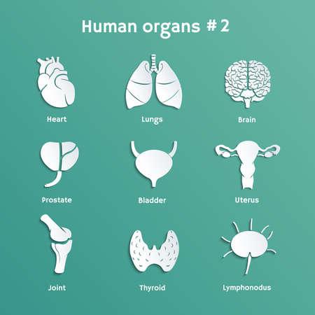 내부 인간의 장기 그림자와 벡터 종이 아이콘