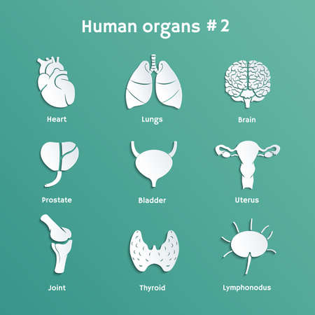 Vector paper icons with shadows of internal human organs