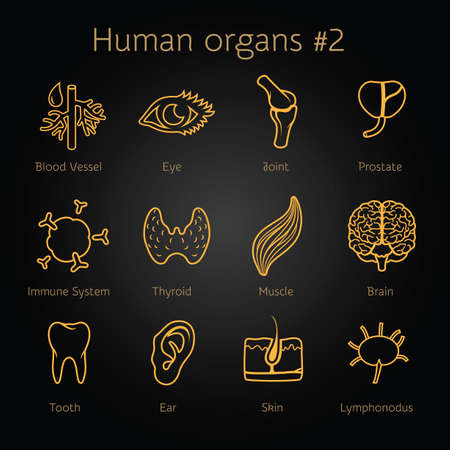 immunity: Vector set of contour icons of human organs and systems for infographic Illustration