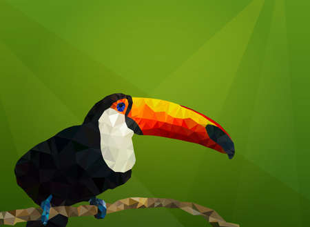 Vector illustration of toucan on green background. Low Poly, Polygonal illustration.