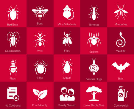 Vector icons of pest insects like flies, cockroaches, bed bugs, spiders termites and animals like bats, mice and snakes for pest control companies