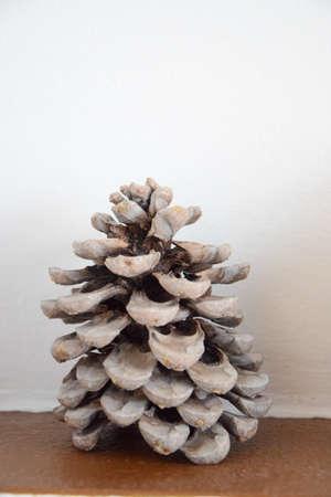 Wintercolored pine cone Stock Photo