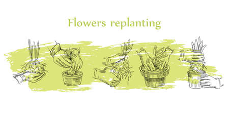 "Vector stock ""Flowers Replanting"" set with hands in gloves putting the sprout into the pot and cutting the roots. Isolated on white. Illustration in engraving vintage style. Illusztráció"