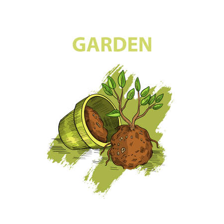 Garden shop logo in engraving colorful vintage style. Stock illustration with little tree in soil near the flowerpot. Sprout with roots isolated on white. Stock Illustratie