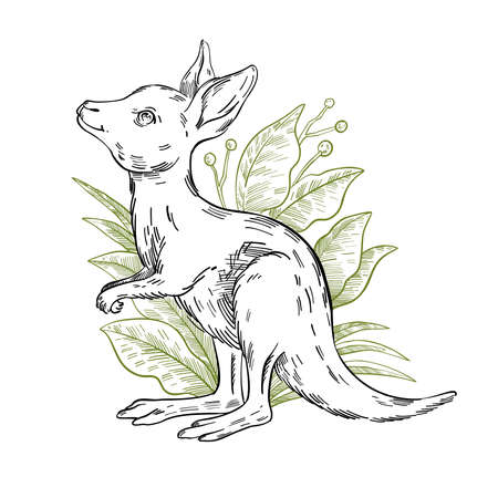 Vector stock illustration with cute baby kangaroo in plants. Clip art in engraving vintage style isolated on white. Rare Australian animal for prints, postcards, souvenirs, tattoos.