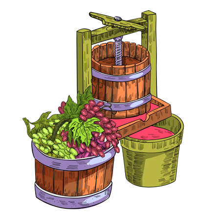 Wine press vector illustration with vine, grape, wooden cask isolated on white. Sketch drawing clipart with beverages making process in engraving style. Autumn harvest clipart for labels, packages Ilustrace