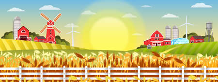Organic farm landscape with wheat field, village houses, windmill, barn, fence. Agriculture rural illustration in cartoon flat style with morning sun, red buildings, greenhouse, rye, green hills Illustration