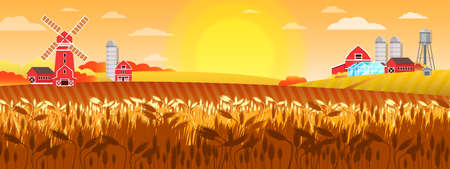 Wheat field vector landscape with mill, village houses, sun, barn greenhouse, water tower. Organic farm illustration in yellow colors in flat style. Autumn harvest background with rye, sunrise, hills