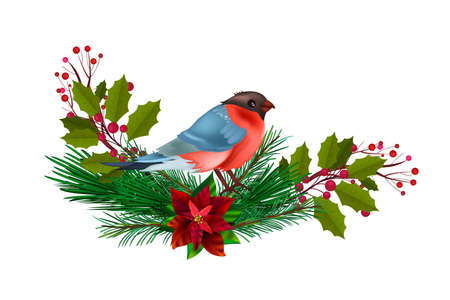 Winter Christmas floral illustration with red bullfinch, fir branches, holly isolated on white. Holiday x-mas postcard with bird, berries, leaves, poinsettia. Christmas bullfinch with evergreen plants
