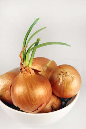 Sprouting yellow onions in a white bowl against a white background