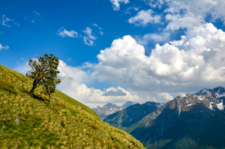 A beautiful mountain landscape. A lonely tree growing on a mountain.