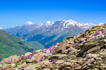 A beautiful mountain landscape with mountain flowers. View of the mountains of the North Caucasus.