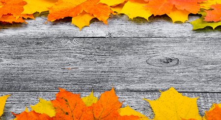 Autumn background with yellow and red maple leaves on a wooden background
