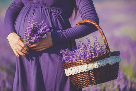 long-haired pretty pregnant woman in a lavender field with basket of lavender flowers. Young romantic pregnant woman picks some lavender from purple lavender field. In dress, bouquet of lavender photo
