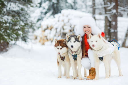huskies: Portrait of a beautiful woman with Siberian huskies - Husky.Beautiful woman with green eyes, white fluffy in winter hat and white pants and red jacket, a light - brown shoes, posing with three husky sled dogs with brown, gray and white color on the backgr