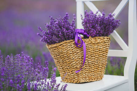 lavande: white chair with backrest stands among the flowers on the chair is brown wicker basket full of flowers of lavender
