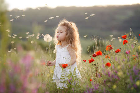 Cute baby girl in a flowery summer field. Little cute girl with thick long curly hair, dressed in a summer white dress, holding a large white dandelion, one plays in green field among bright flowers on a warm summer day.