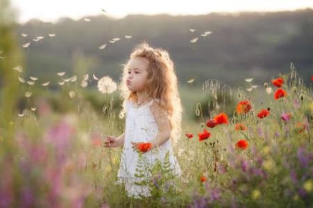 Nettes Baby in einer blumigen Sommer Feld. Kleines nettes Mädchen mit dicken langen lockigen Haaren, in einem Sommer-weißen Kleid gekleidet, hält ein großen weißen Löwenzahn, auf dem grünen Gebiet spielt eine von hellen Blüten an einem warmen Sommertag.