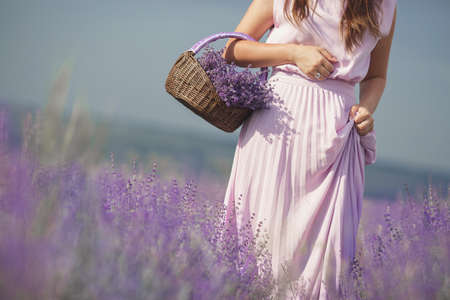 A slim young woman, dressed in a pink long dress, walking through a huge lilac blooming field of lavender collecting in a basket fragrant spring flowers and enjoying nature and a warm summer day. Stockfoto