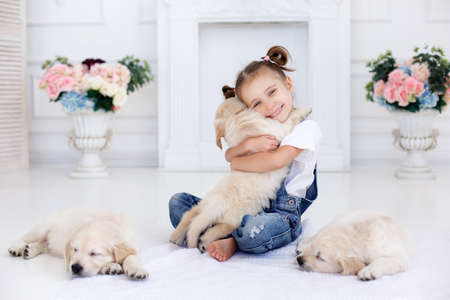 Little girl, brunette hair, tied with pink bands into two tails, dressed in a white t-shirt and blue denim overalls is playing at home, sitting alone on the bed with three puppies Golden Retriever