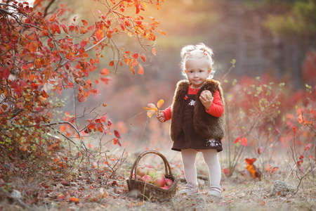 Baby picking apples in autumn. Little baby girl playing in the apple tree orchard. Healthy girl.Little girl with basket